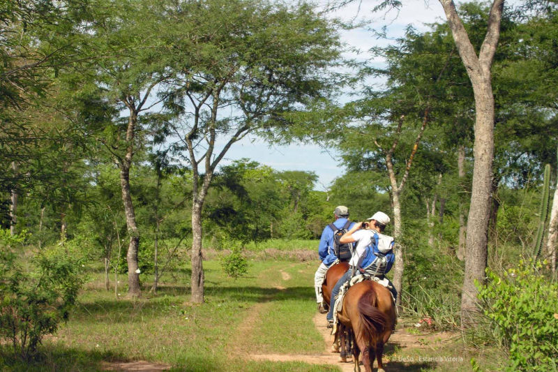 Discovery tour on horseback