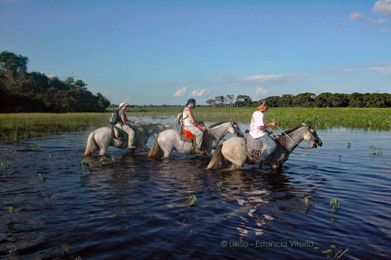 Tour with the horses in wetland
