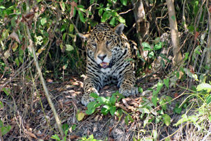 Tour 11 - High plateau, snorkeling in the crystal clear river, Pantanal and Jaguar Tour