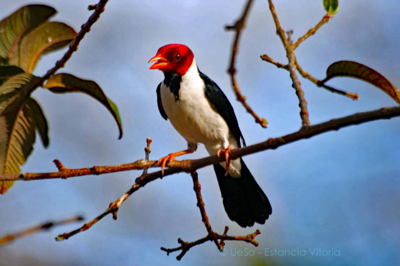 640 bird species in the Pantanal
