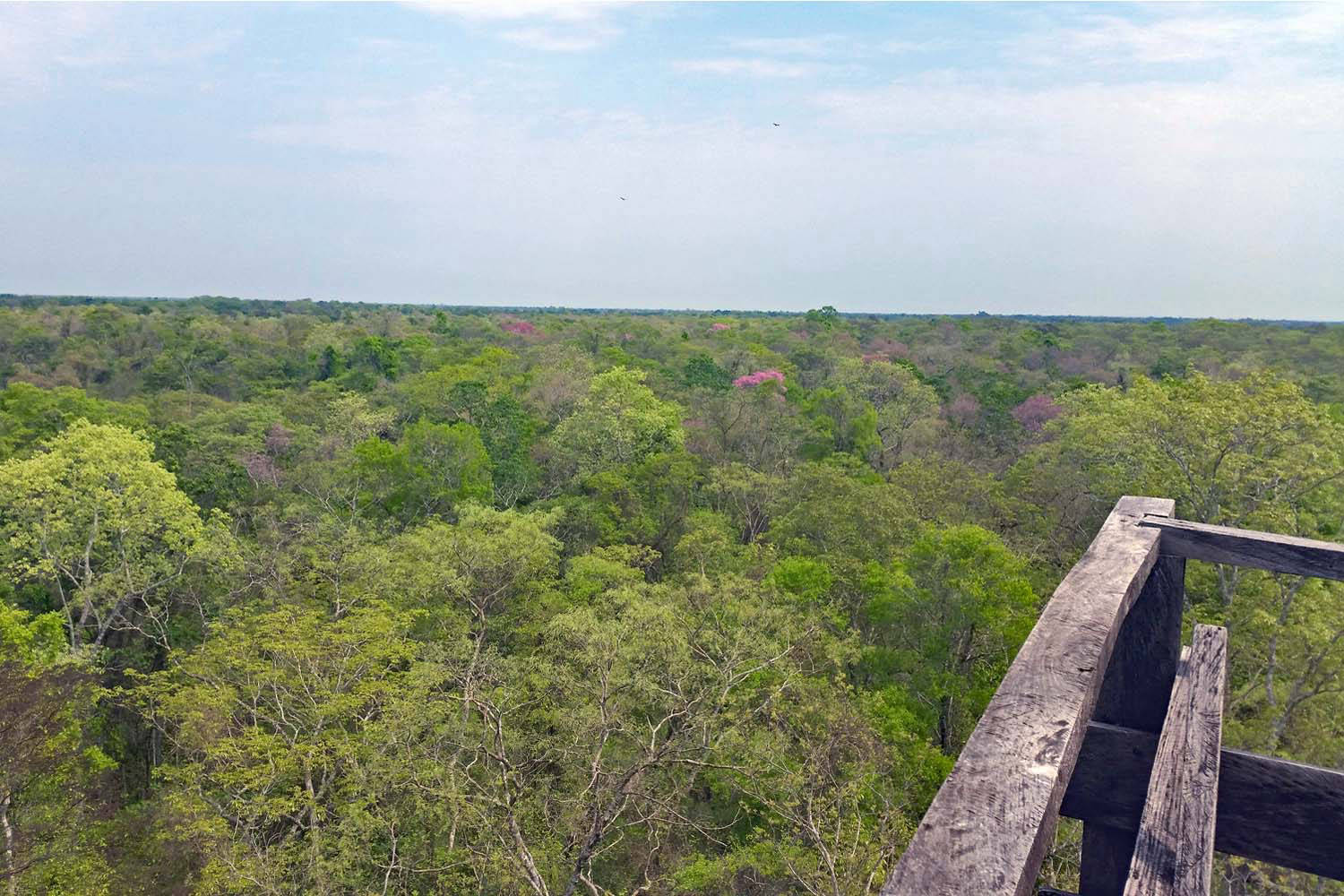 View from the tower over the surrounding countryside in the Pantanal